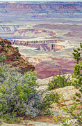 Canyonland Prints - Canyon Lands Print by Wanda Krack