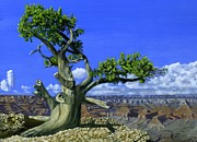 Phil Clark Paintings - Canyon Tree by Phil Clark