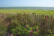 Amazing Jules - Cape Beach Fence
