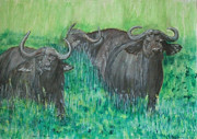 Cape Buffalo Paintings - Cape buffalo by Dylan Williams