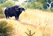 Cape Buffalo Paintings - Cape Buffalo Posing by Andy Taylor