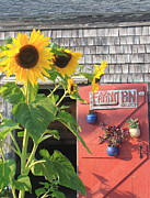 Wellfleet Prints - Cape Cod Art Gallery and Sunflowers Print by John Burk