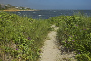 Amazing Jules - Cape Cod Beach Path