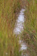 Mashpee Prints - Cape Cod Marsh Print by Allan Morrison