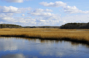 Cape Cod Mass Metal Prints - Cape Cod Marsh Metal Print by Luke Moore