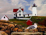 Maine Shore Framed Prints - Cape Neddick Lighthouse Maine Framed Print by Nick Zelinsky