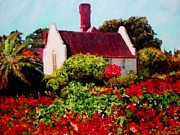 Rose Garden Painting Framed Prints - Cape Rose Framed Print by Michael Durst