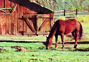 Bob and Nadine Johnston - Capital Reef Farm Horse...