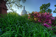 U.s. Capitol Dome Prints - Capitol Dome Print by Michael Donahue
