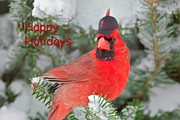 Greeting Photos - Capped The Cardinals by Dale J Martin