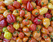 Hot Peppers Prints - Capsaicin Collection Print by Terri Winkler