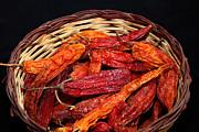 James Brunker - Capsicum baccatum chilis