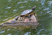 Kate Brown - Captain Turtle
