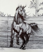 Wild Horses Drawings - Captured at Last by Cheryl Poland