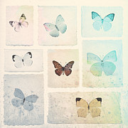 Butterflies Posters - Captured Beauty Poster by David Ridley