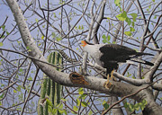 Reptiles Painting Originals - Caracara and Iguana by Patricia Solem