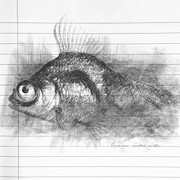 Canvas Drawings - Carassius auratus by Taylan Soyturk