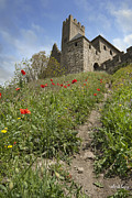 Castles Photos - Carcassonne Poppies by Robert Lacy
