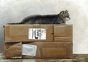 Cat Paintings - Cardboard Queen test by Cara Bevan