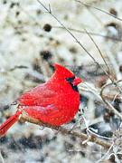 Peggy  Franz - Cardinal Bird Christmas...