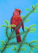 Finch Drawings Metal Prints - Cardinal Bird Metal Print by Yvonne Johnstone