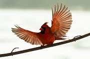 F Lee Photography - Cardinal Blessing