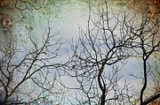 Dark Skies Posters - Cardinal Branches Poster by Jan Amiss Photography