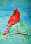 Cardinals Drawings - Cardinal by Christina A Pacillo