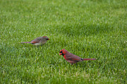 Tony Hammer - Cardinal Couple