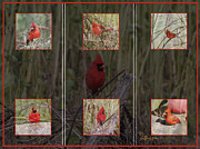 Photo Manipulation Photo Posters - Cardinal Family Poster by EricaMaxine  Price