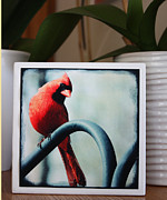 Cabin Wall Mixed Media - Cardinal Fine Art Photo Block by Penny Hunt