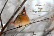 Bird In Snow Posters - Cardinal In Snow Christmas Card Poster by Lois Bryan