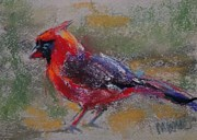 Song Pastels - Cardinal in the Grass by Marie Marfia