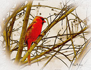 Barry Jones Metal Prints - Cardinal in the Myrtles Metal Print by Barry Jones