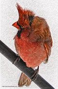 LeeAnn McLaneGoetz McLaneGoetzStudioLLCcom - Cardinal in the wind