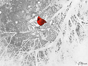 Red Bird In Snow Posters - Cardinal In Winter Poster by Ellen Henneke
