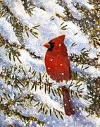 Robert Stump - Cardinal in Winter