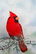Laurel Best - Cardinal