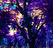 Michael Aviles Prints - Caribbean night-tree with blue light Print by Michael Aviles