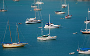 Virgin Prints - Caribbean Sailboats Print by Amy Cicconi
