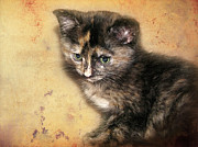 Kitten Digital Art - Carmel by Ellen Cotton