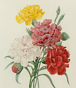 Green Yellow Paintings - Carnations from Choix des Plus Belles Fleures by Pierre Joseph Redoute