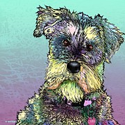 Cute Schnauzer Digital Art - Caro by Marlene Watson