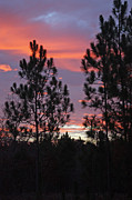 Carolyn Stagger Cokley Metal Prints - Carolina Sunset Metal Print by Carolyn Stagger Cokley