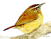 A Gurmankin - Carolina Wren Animal...