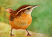 Chickadee Greeting Cards Framed Prints - Carolina Wren Greeting Card Size Framed Print by Debbie Portwood