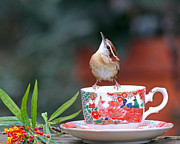 Luana K Perez - Carolina Wren Is This...