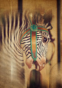 Amusement Park Framed Prints - Carousel Zebra Framed Print by Amy Weiss