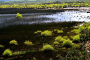 Arie Arik Chen - Carretera Austral river