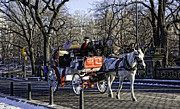 Manhattan Snow Posters - Carriage Driver - Central Park - NYC Poster by Madeline Ellis